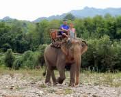 FLASHPACKER | Karin und Henning in Laos nahe Luang Prabang beim Mahout Training auf einem Elefanten. Die Tour ist ein absolutes Highlight