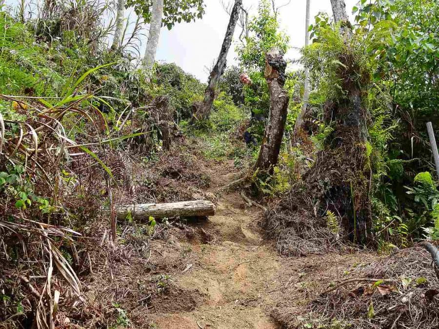 Malaysia | Trail 10 bei Tanah Rata, Cameron Highlands. Ein schmaler Weg durch den Urwald, Henning versteckt sich im Dickicht