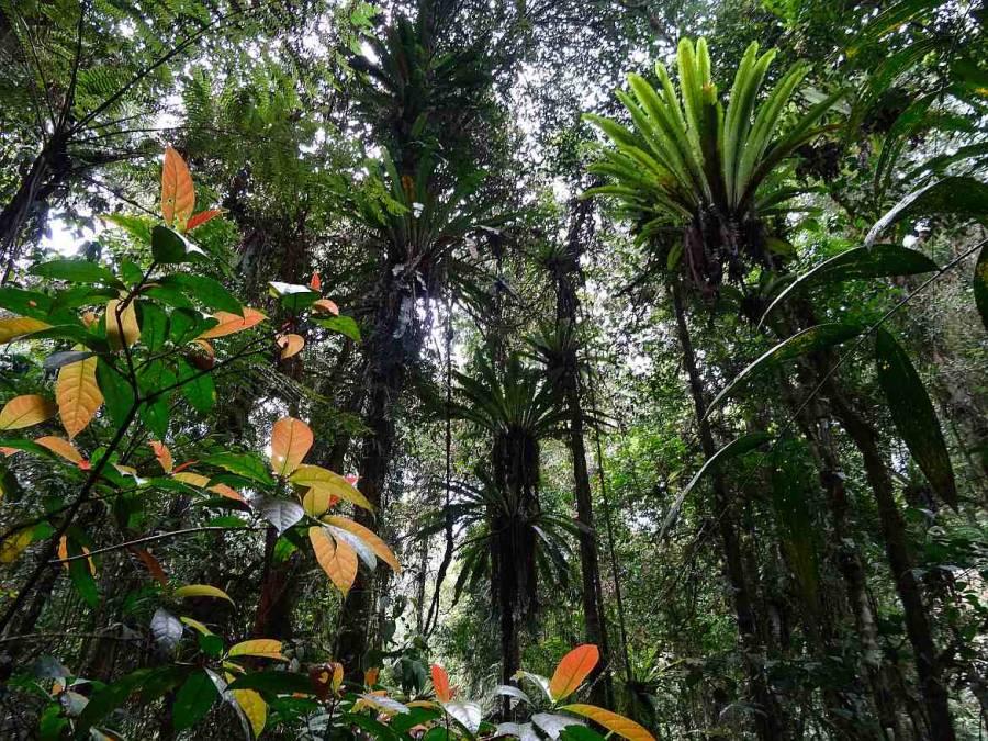 Malaysia | Eindrücke von Trail 2 durch den Urwald in den Cameron Highlands. Sattgrüne Palmen und andere Urwaldgewächse von unten fotografiert.