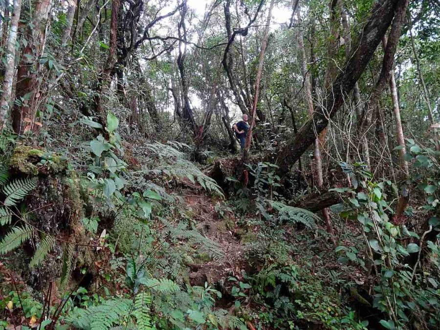 Malaysia | Trail 2 durch den Urwald in den Cameron Highlands. Henning wartet auf dem nach oben führenden schmalen Pfad