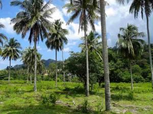 Malaysia | Eindrücke des Urwalds im Inland. Palmen und andere grüne Urwaldgewächse bei blauenm Himmel