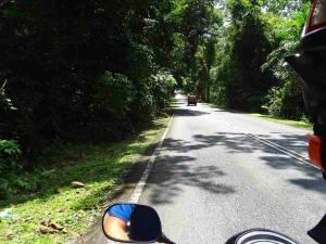 Malaysia | Gut ausgebaute Straße durch den Urwald beim Roller fahren