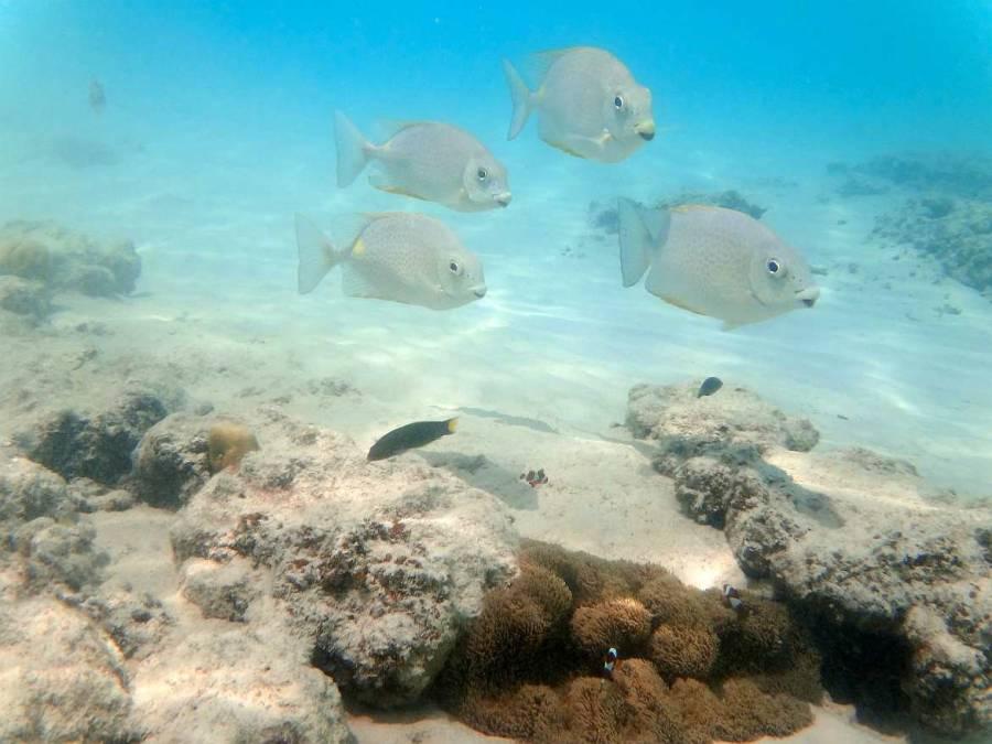 Malaysia | Unterwasserwelt mit Nemo & Co. beim Schnorcheln auf Perhentian Besar