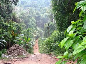 Malaysia | Brauner lehmiger von sattgrünem Regenwald gesäumter Weg durch den Dschungel auf Perhentian Kecil