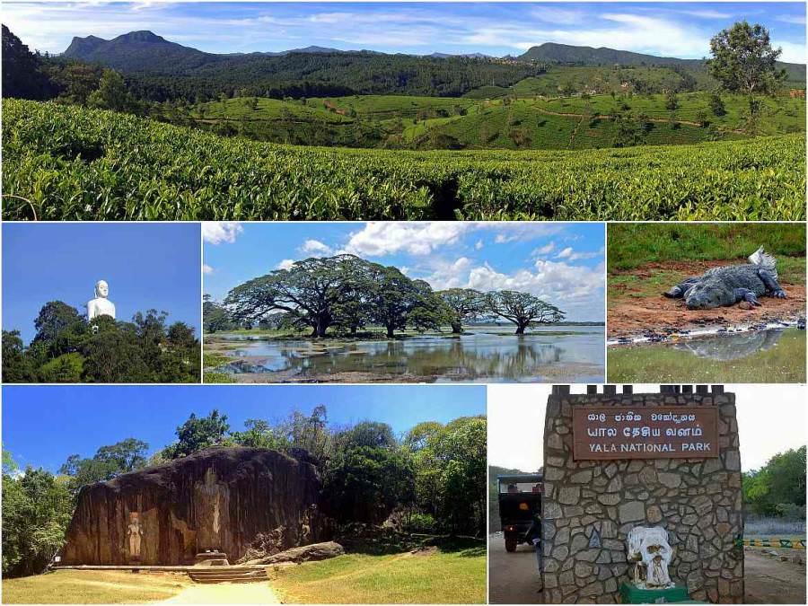 Sri Lanka |Eindrücke auf der Rundreise im Zentralland: Teeplantagen bei Haputale, Kandy, Tissa Wella und Yala Nationalpark