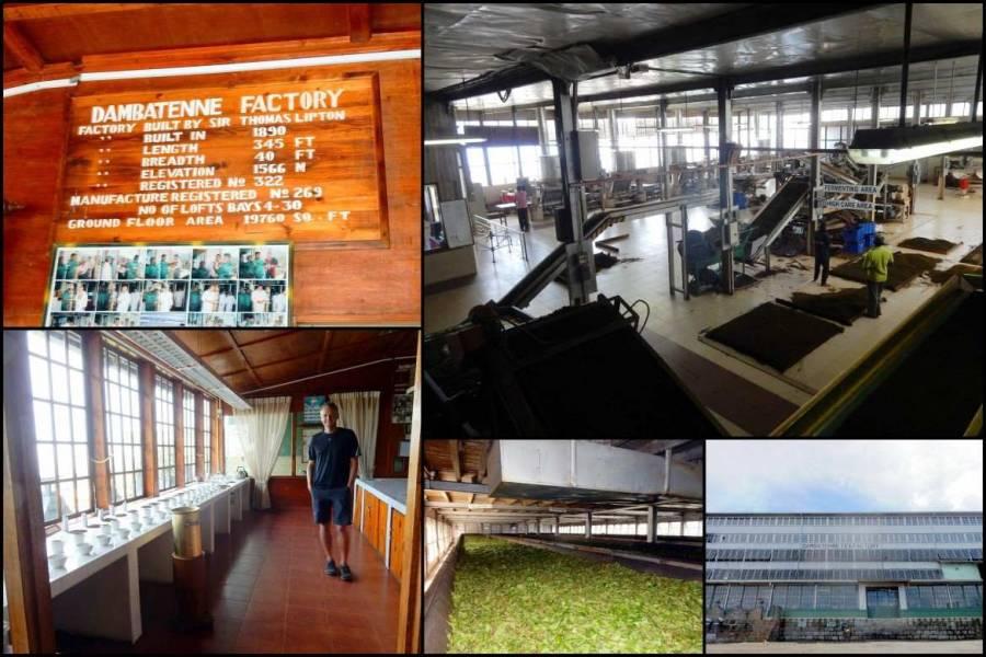Sri Lanka   Überblick über der Produktionsanlagen der Dambatenne Teefabrik bei Haputale