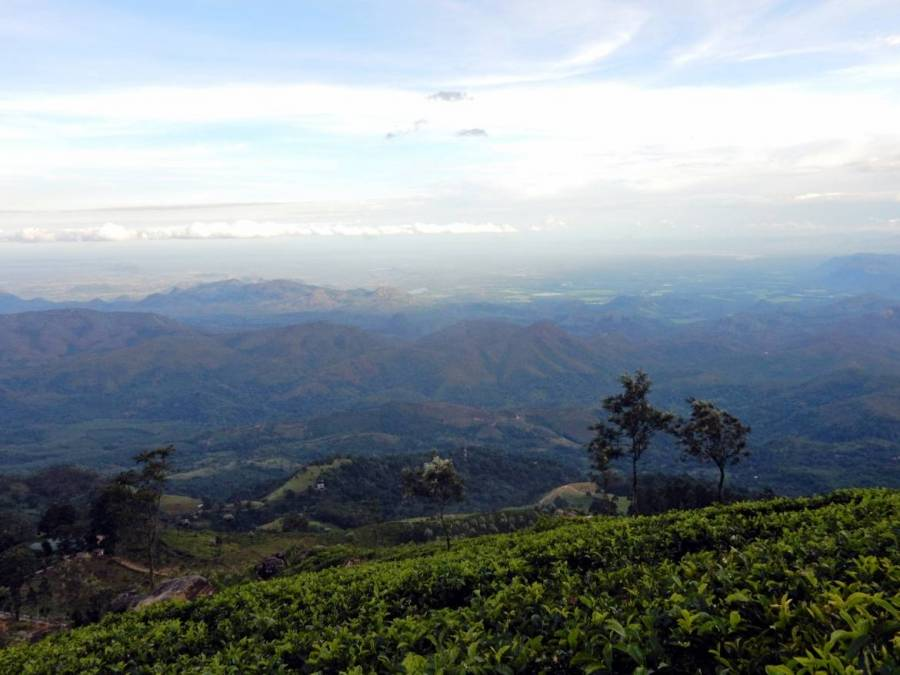 Sri Lanka   Panoramablick Richtung Südspitze bei der Wanderung durch die grünen Teeplantagen