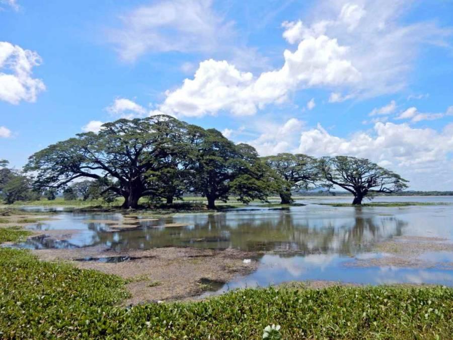 Sri Lanka   Blick auf beeindruckende Bäume und die traumhafte Kulisse am See von Tissa Wewa