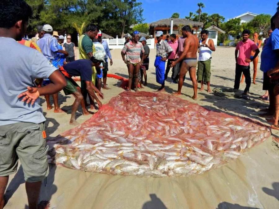 Sri Lanka | Ein prall gefülltes Netz und Rekordfang der Fischer von Trincomalee