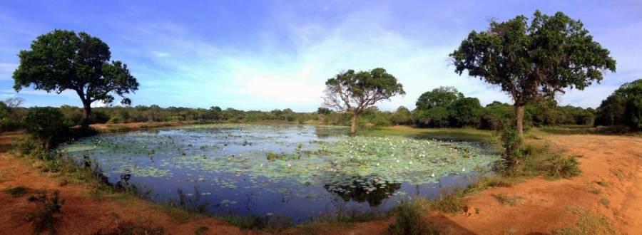 Sri Lanka | Bild eines Wasserlochs in Mitten der Steppe des Yala Nationalparks