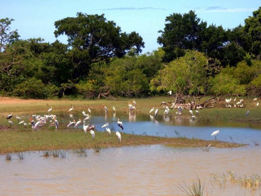 Sri Lanka | Kormorane und Störche an einem See im Yala Nationalpark