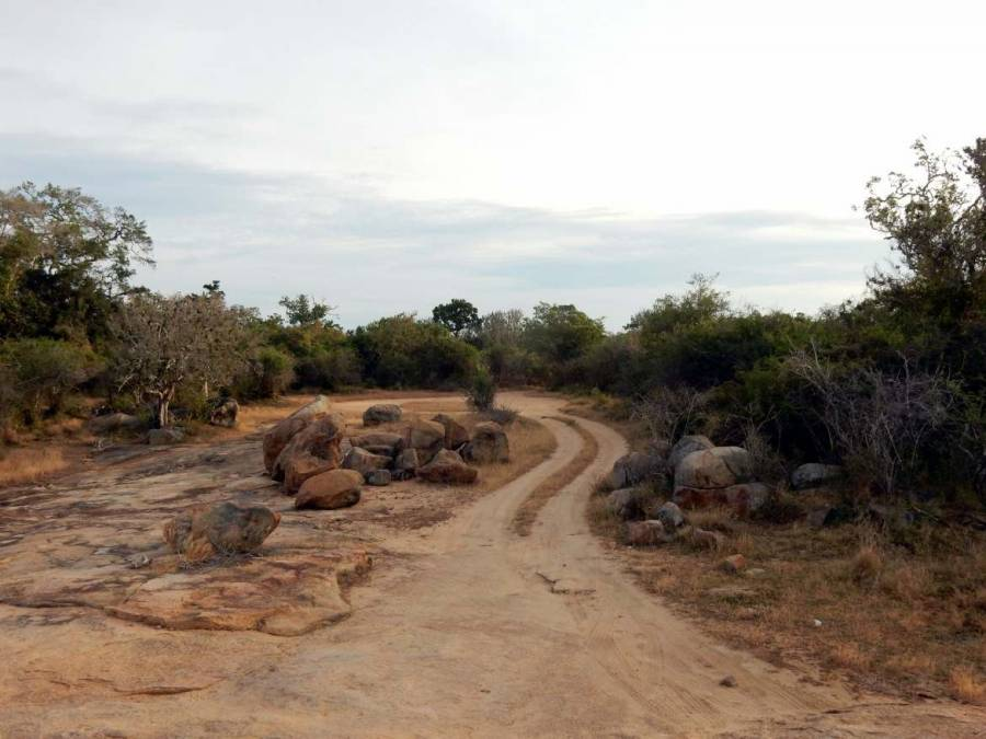 Sri Lanka | Typische Offroad-Tracks durch die Steppe des Yala Nationalparks bei der Safari-Tour