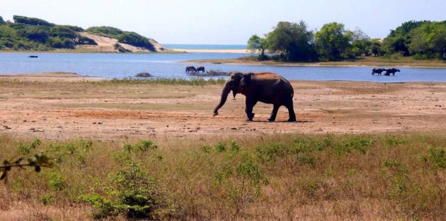 Sri Lanka   Elefant vor atemberaubender Lagunenkulisse auf der Safari im Yala Nationalpark