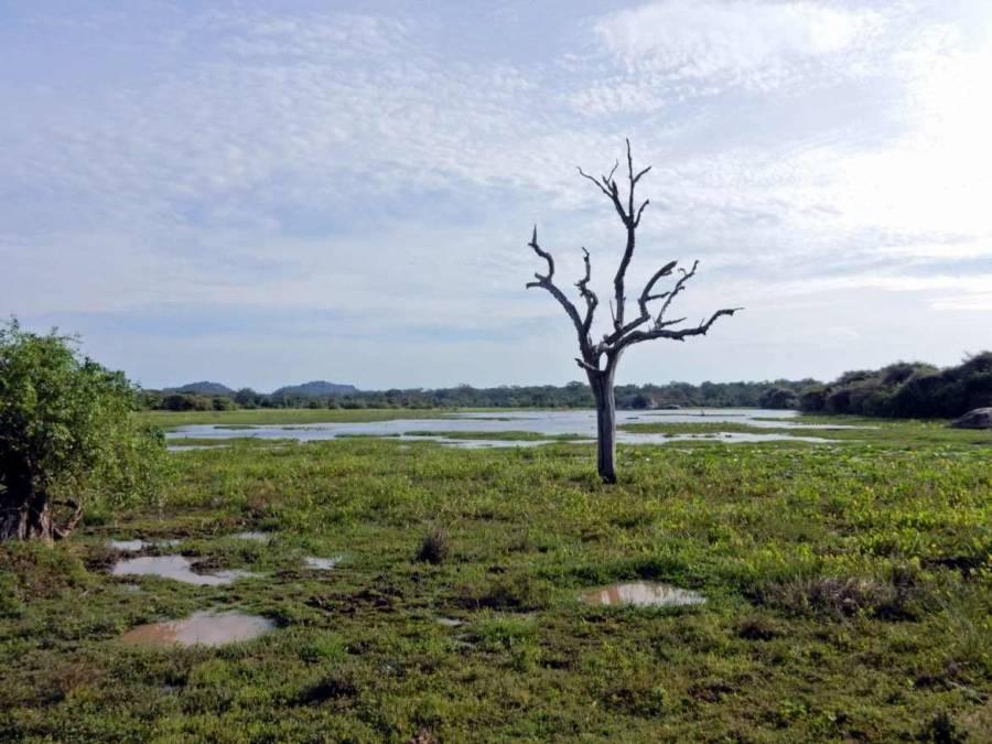 Sri Lanka | Abgestorbener Baum vor einem See in der Steppenlandschaft des Yala Nationalparks