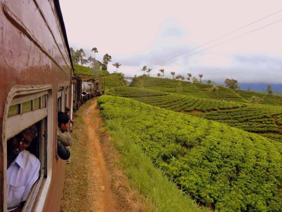 Sri Lanka | Sri Lanka |Auch die Einheimischen genießen den phänomenalen Blick auf die Teeplantagen und hängen aus den Zugfenstern um die märchenhafte Kulisse des Hochlandes zu genießen.