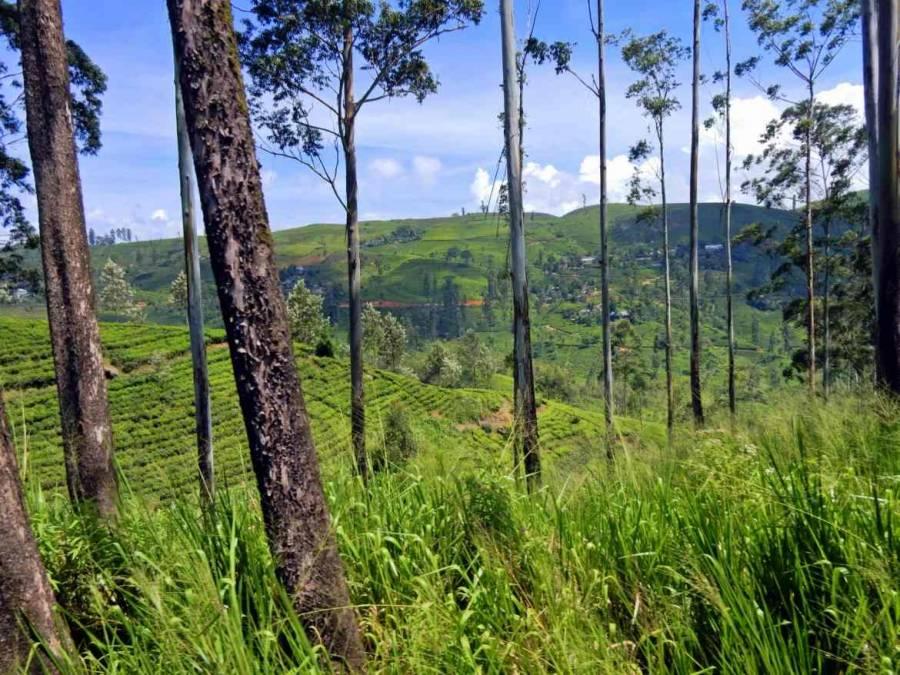 Sri Lanka | Blick aus dem Zugfenster auf sattgrüne Teeplantagen auf der Zugfahrt von Colombo nach Kandy