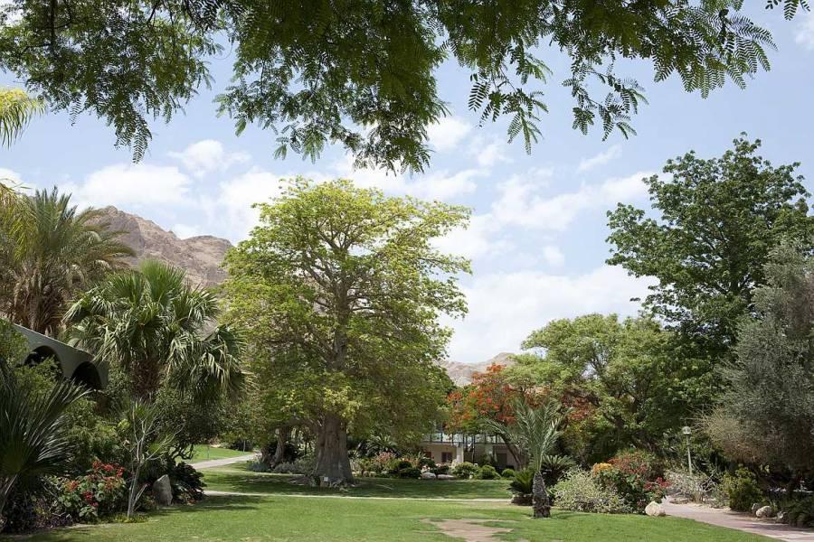 Ein Gedi | Grüner Botanischer Garten im Kibbutz vor einem Haus mit Bäumen inmitten der Wüste