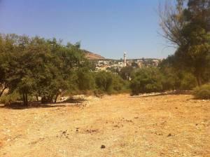 Jesus Trail | Zwischen den Bäumen auf dem Weg sieht man die Moschee eines naheliegenden Dorfes