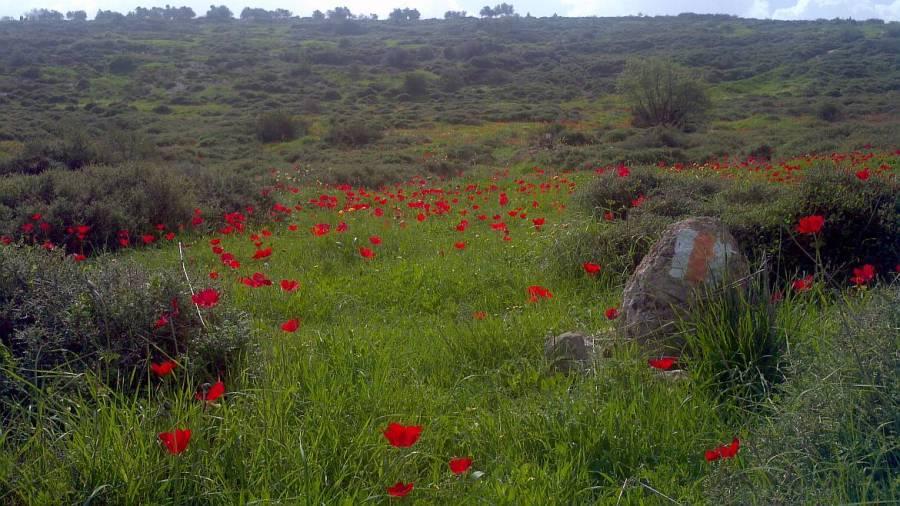 Jesus Trail | Rote Blumen und Blick auf eine grüne Hügelkette entlang des Weges