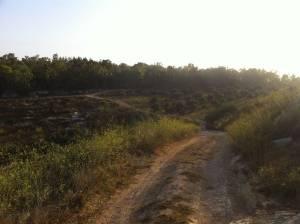 Jesus Trail | Die Sonne geht über dem sich durch die Landschaft schlängelnden Weg auf