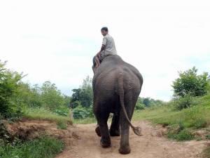 Laos | Elephant Village. Elefant mit seinem Mahout von hinten