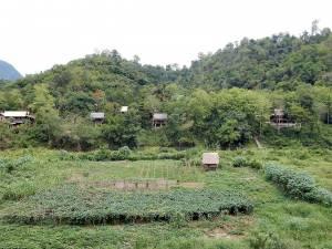 Laos | Elephant Village Unterkunf. Holzhütten inmitten des grünen Urwalds