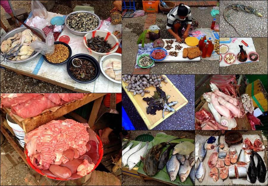 Markt-Highlights: die Eindrücke des Morning Market in Luang Prabang. Collage mit Fisch, Fleisch, Innereien, Fröschen, Käfer, Maden, Kakerlaken, Schlangen, Waran, Frösche und anderen Insekten