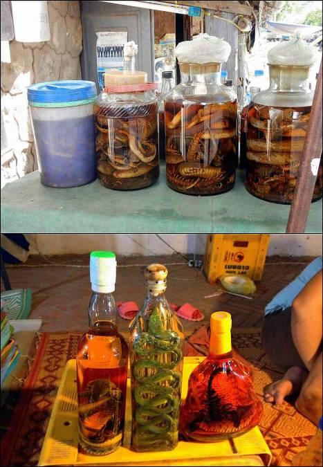 Schlangenschnaps. Verschiedene durchsichtige Flaschen gefüllt mit Schnapps oder Reiswein und Schlangen und anderen Insekten