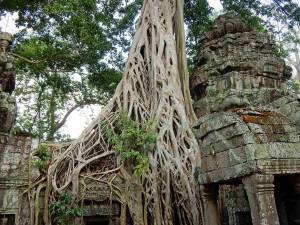 Kambodscha | Banteay Kdei im Ankor Park samt Urwald, der die Mauern überwuchert