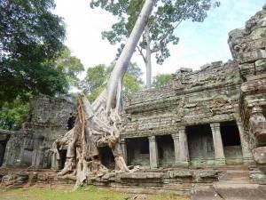 Kambodscha | Banteay Kedai Tempel überwucherte Mauern von Urwald