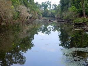 Kambodscha | Fluss umgeben von Urwald innerhalb der Tempelanlagen des Angkor Archälogischen Park