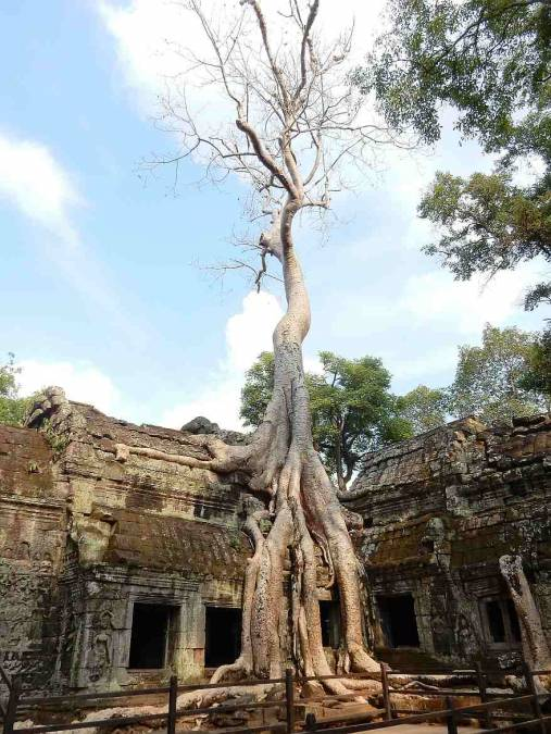 Kambodscha | Der Tempel Ta Prohm. Urwald überwuchert die Steinmauern