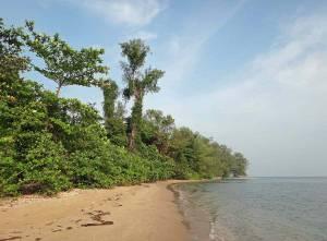 Kambodscha | Koh Thmei Naturstrand. Urwald, goldfarbener Strand am flach abfallenden Meer bei blauem Himmel