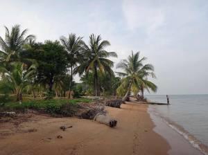 Kambodscha | Koh Thmei Palmen am Strand beim Spaziergang südlich des Koh Thmei Resort
