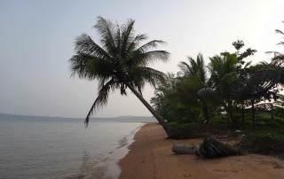 Kambodscha | Koh Thmei Eindrücke beim Strandspaziergang. Eine Palme ragt über den Strand bis zum Meer. Koh Thmei gehört zu unseren Tipps der Inseln