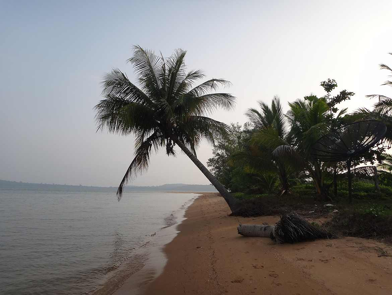 Kambodscha   Koh Thmei Eindrücke beim Strandspaziergang. Eine Palme ragt über den Strand bis zum Meer. Koh Thmei gehört zu unseren Tipps der Inseln