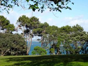 Neuseeland | Nordinsel, Point Erin Park in Auckland und das Panorama vom Campingplatz durch Nadelbäume auf das blaue Meer mit einigen Segelbooten