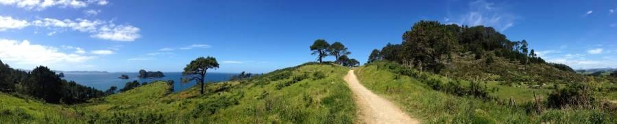 Eines der Highlights der Nordinsel, Panorama beim Cathedral Cove Walk in der Coromandel auf sattgrüne Landschaft und den Weg mit dem tiefblauen Meer im Hintergrund bei blauem Himmel