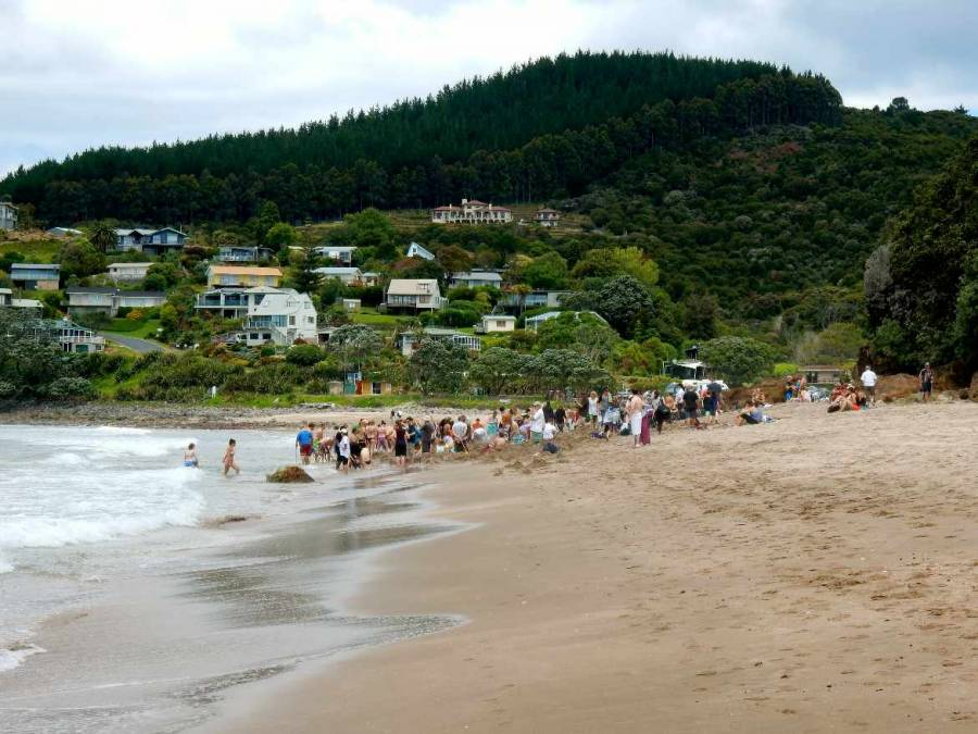 Neuseeland | Nordinsel, Buddelnde Touristen am Hot Water Beach in Hahai in der Coromandel