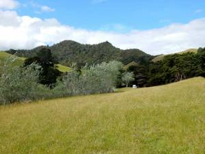 Neuseeland | Nordinsel, Simpsons Beach Campingplatz im Grünen bei Whitianga in der Coromandel. Blick aus der Ferne auf unseren weißen Camper von Wendekreisen und die grünen Berge im Hintergrund