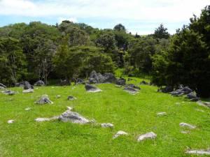 Neuseeland | Nordinsel, Hinkelsteine auf grünen Wiesen auf dem Weg zu den Abbey Caves bei Whangarei im hohen Norden