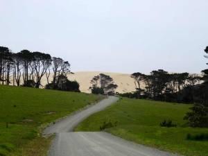 Neuseeland | Nordinsel, Hoher Norden, Anfahrtsweg zu den Te Paki Sanddünen im Te Paki Stream durch grüne Wiesen und Bäume mit den gelben Sanddünen im Hintergrund