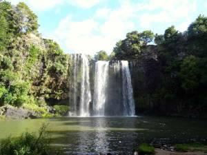 Neuseeland | Nordinsel, Whangarei Falls bei Whangarei im hohen Norden. Die meterhohen Wasserfälle stürzen in ein Flussbecken umgeben von grünen Büschen bei blauem Himmel
