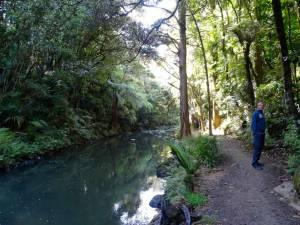 Neuseeland | Nordinsel, Weg entlang des Flusses von den Whangarei Falls zum AH Reed Kauri Park bei Whangarei im hohen Norden. Henning steht im blauen Kapuzenpulli am Weg neben dem Fluss
