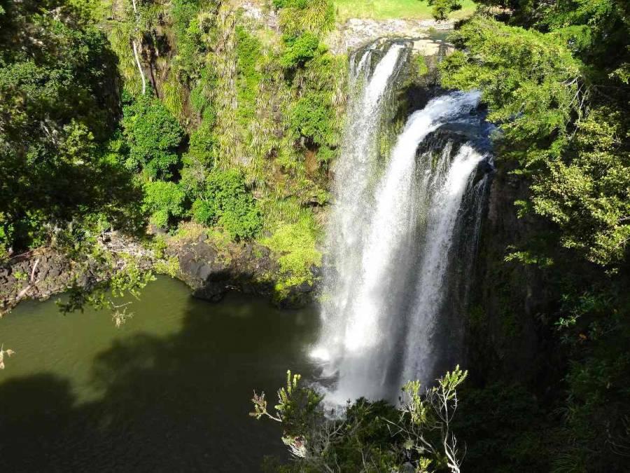 Neuseeland | Nordinsel, Whangarei Falls bei Whangarei im hohen Norden. Blick von oben auf die meterhohen hinabstürzenden Wasserfälle