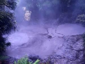 Neuseeland | Nordinsel, dampfenden Schwefelquellen in Rotorua. Blubberndes graues dickflüssiges Wasser bei dampfendem Nebel