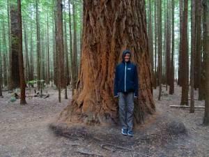 Neuseeland | Nordinsel, Riesig: The Redwoods in Rotorua. Karin steht vor einem dicken Baumstamm der meterhohen Bäume in schwarzer Jacke mit Kapuze und brauner Hose