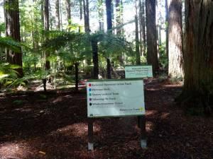 Neuseeland | Nordinsel, The Redwoods Tracks in Rotorua. Weißes Schild als Wegweiser zu den verschieden Trails im Wald