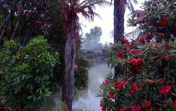 Nordinsel, The Redwoods Whakarewarewa Forest Memorial Walk gehört zu unseren Tipps, Sehenswürdigkeiten und Highlights in Rotorua. Pinke Blüten und sattgrünen Büschen vor dampfenden Schwefelquellen und Geysire