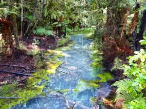 Neuseeland | Nordinsel, Schwefelquelle im The Redwoods Whakarewarewa Forest in Rotorua. Blick auf ein türkisfarbenes kristallklares Wasser mit verschiedene grünen Farnen und Pflanzen umgeben bei Sonnenschein